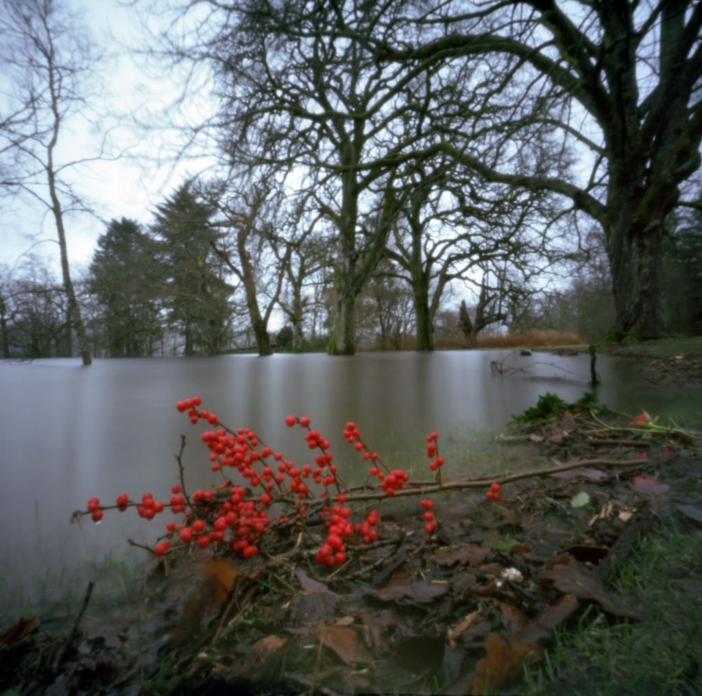 By the soggy banks of Loch Lomond (Flyer 6x6, Ektar 100)